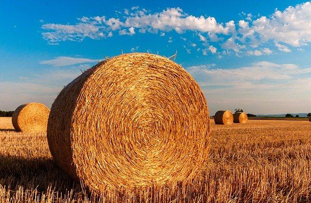 Chcete podnikat v zemědělství?